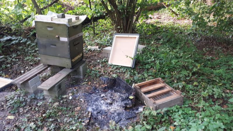 Unbekannter verbrennt Bienenvolk (Foto: SAT.1 NRW)